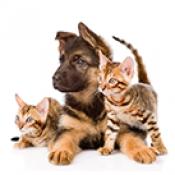Услуги за животни (0)