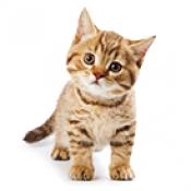 Котки (2)