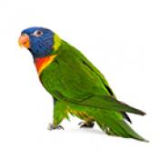 Птици (0)