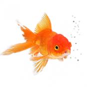 Рибки (0)