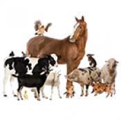 Селскостопански животни  (0)